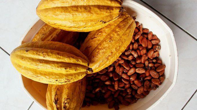Glücklich Und Schlau: Die Heilkraft Der Schokolade
