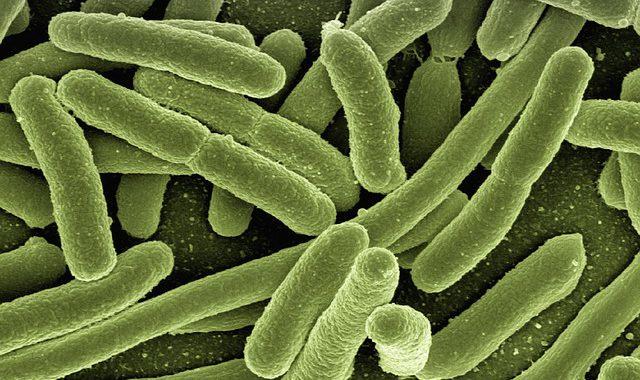 """Buchvorstellung: Unser Neuer Ratgeber """"Pflanzliche Antibiotika Richtig Anwenden"""""""
